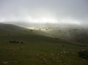 Mt Bryan BrownHill 2015 007